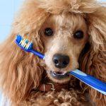 Tandborstning för hund