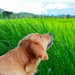 hundar som äter gräs varför