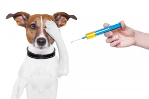 hundvaccin