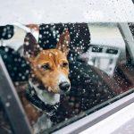 kalla bilar farligt hundar
